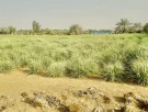 تجاري للبيع في رماح - ابوظبي