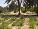 ارض للبيع في سويحان - ابوظبي